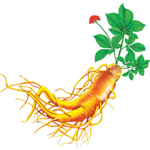 New Insights Show Ginseng Fights Inflammation
